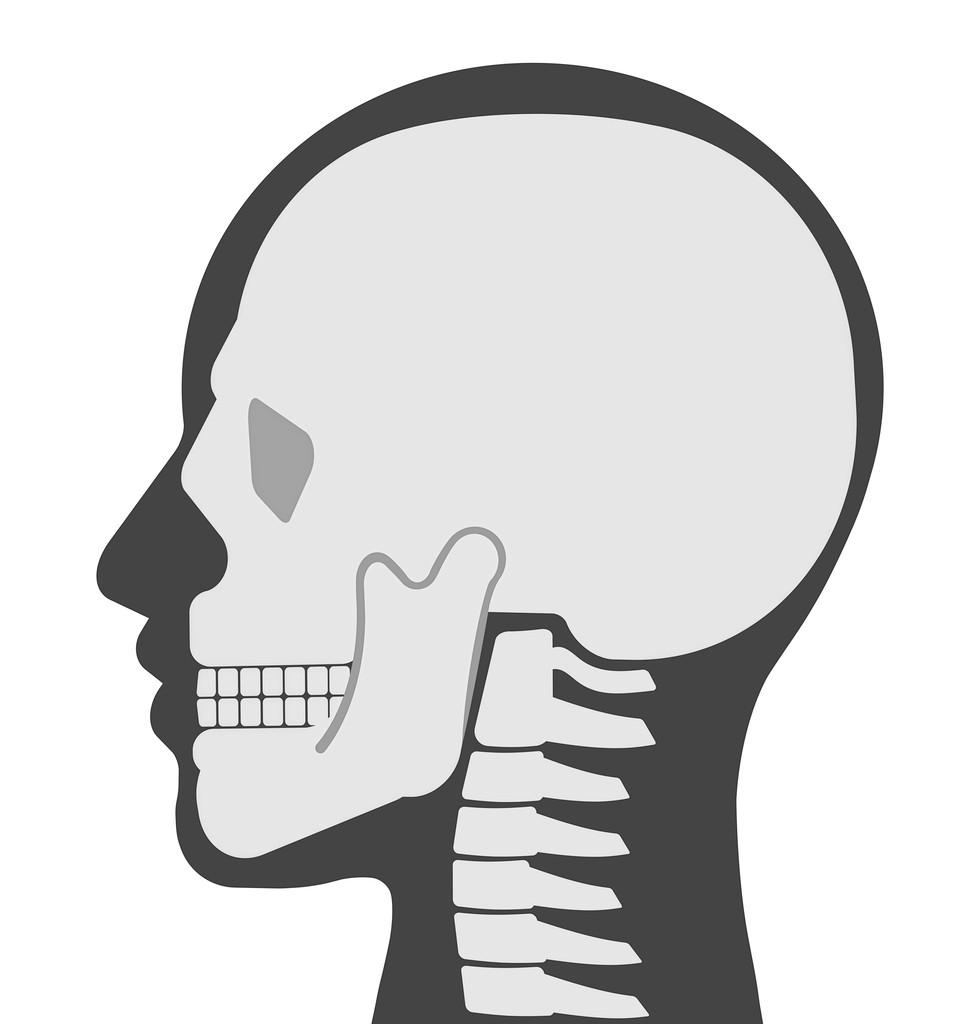 横顔の頭蓋骨